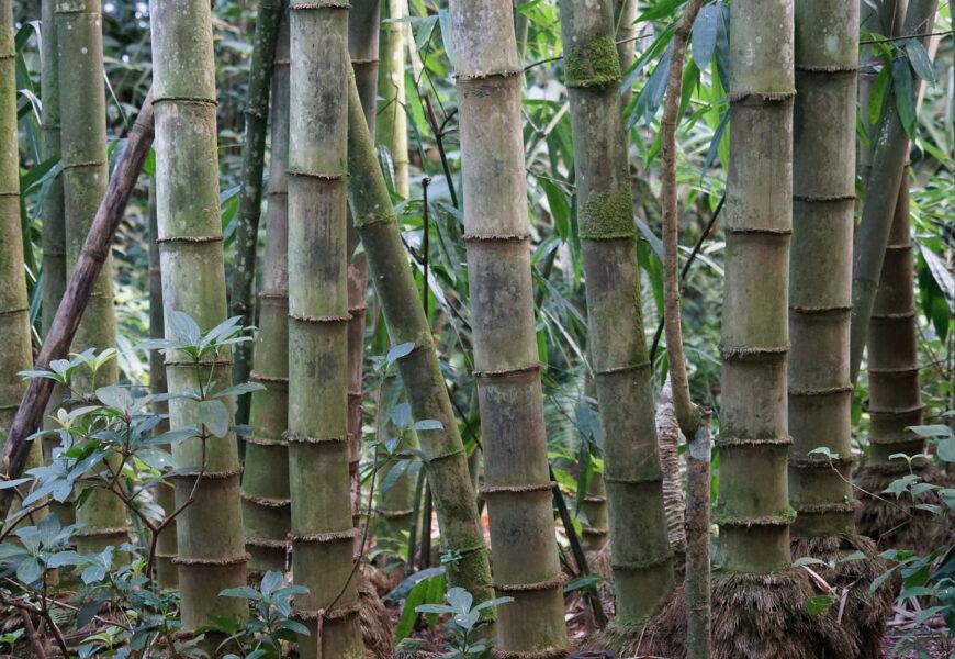 bambu-economia-verde5