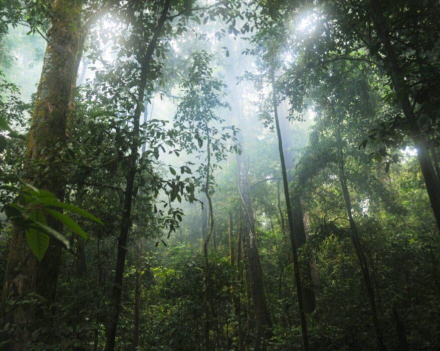 bosques CO2