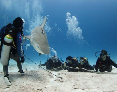 tiburones México